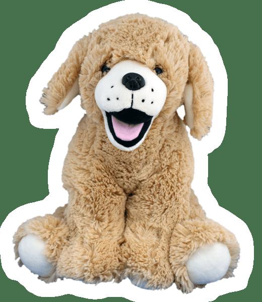 Goldie de Labrador Retriever | Hond